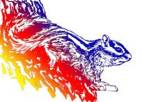 手绘松鼠线描插画