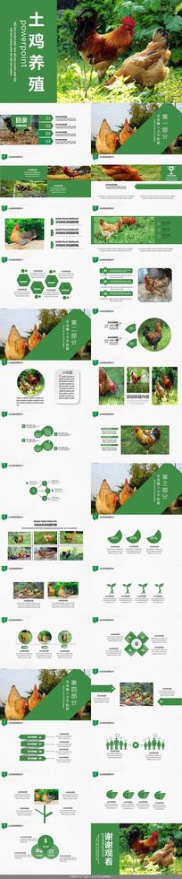 绿色土鸡养殖PPT模板