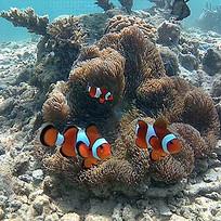 海底浮潜热带鱼珊瑚