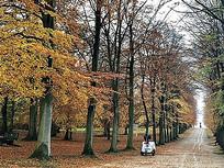 秋游金色树叶森林植物公园景观