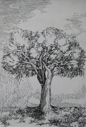 一棵大树素描手绘 JPG