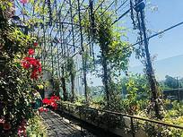 植物园绿化景观花艺大棚