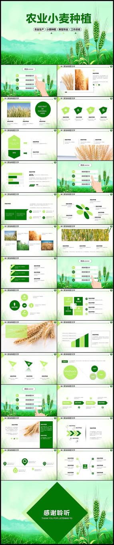 绿色农业小麦种植业PPT
