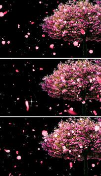婚礼背景樱花树花瓣飘落视频素材