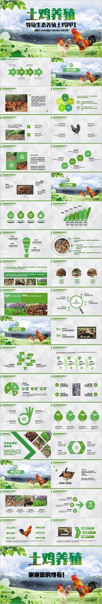 牧畜牧场生态养殖土鸡PPT