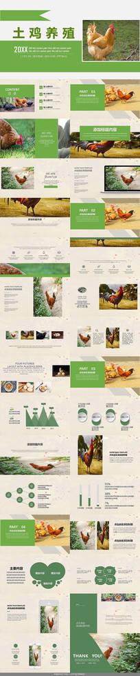 农业养殖绿色土鸡PPT模板