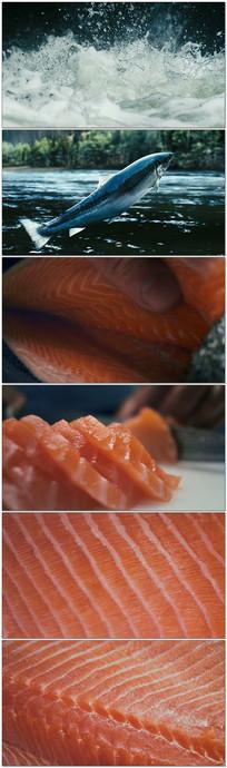 河流野生鱼生鱼片视频素材