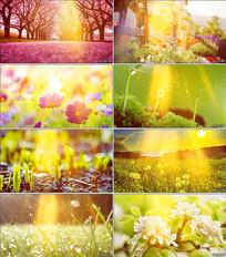 春暖花开背景视频素材