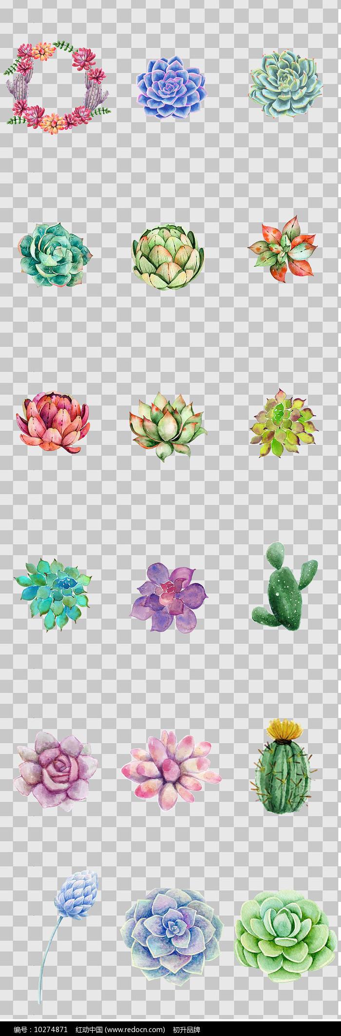 水彩手绘多肉植物元素图片