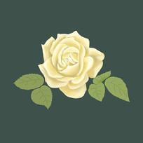 手绘白色玫瑰花原创素材