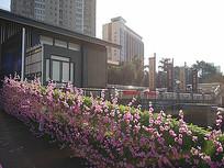 桃花装饰护栏景观
