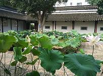 中式住宅荷塘荷叶景观
