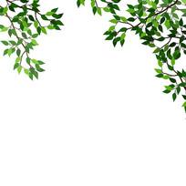 树枝树叶边框