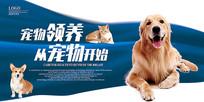 宠物领养海报设计