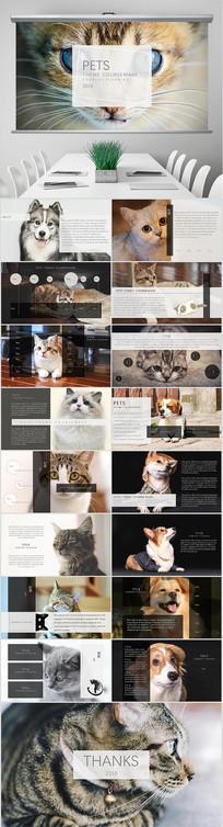 宠物主题课件PPT模板