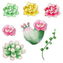 原创元素手绘水彩多肉仙人掌素材