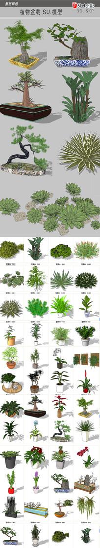 园林植物盆栽