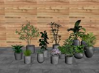 植物盆栽组合