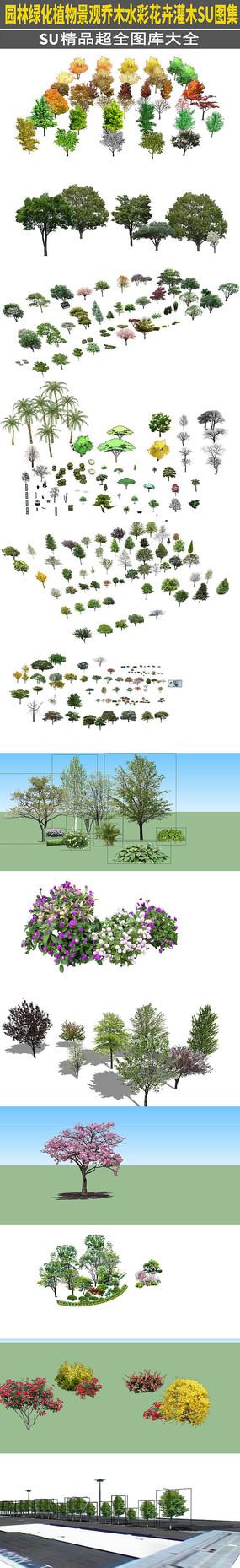 园林绿化植物景观乔木水彩花卉灌木SU模型