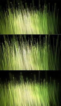 浪漫梦幻光线粒子生长视频模板