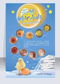 无壳孵化小鸡科研实验展示海报