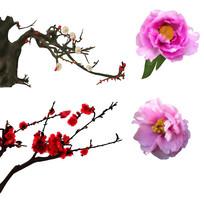 原创手绘梅花桃花牡丹花装饰元素3