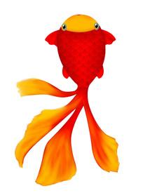 原创高清手绘金鱼