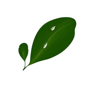 墨绿色带水滴叶片