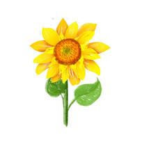 笔直成长的金色向日葵