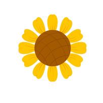 单瓣儿向日葵花朵