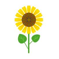 花紋圖案向日葵