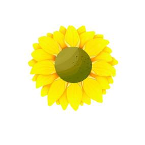 简单的向日葵花朵