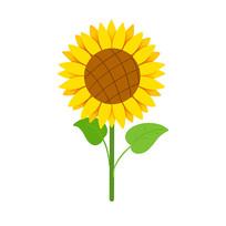 简洁美丽的向日葵