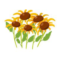 向日葵花叢圖案