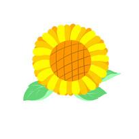 向日葵太陽花圖案