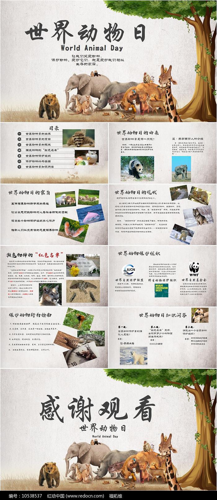 世界动物日保护动物PPT模板
