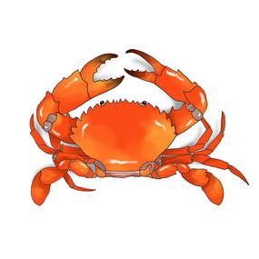 手绘青蟹海鲜高清素材