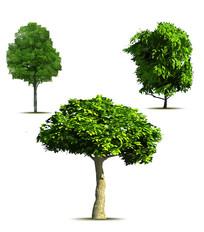 AI矢量乔木灌木树木元素素材
