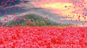大气唯美满山映山红背景视频素材