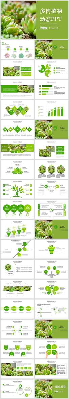 绿色多肉植物多肉植物发芽植物生长PPT