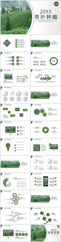 茶叶种植PPT模板