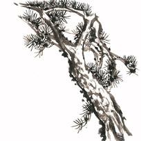 冬季的松树插画