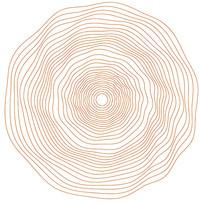 年轮纹路 线描
