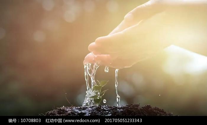 双手浇灌小树苗视频素材图片