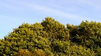 风吹动树叶视频素材
