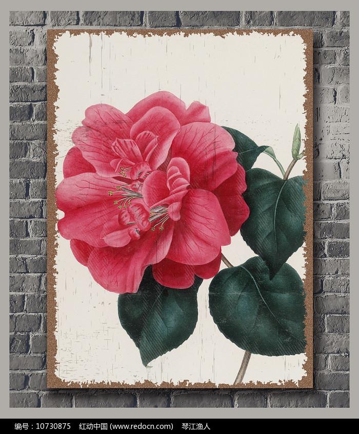 怀旧茶花装饰画图片