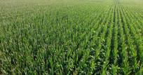 农业农田种植视频素材