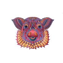 原创十二生肖猪插画