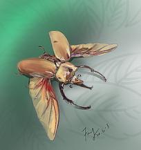 昆虫独角仙