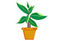原创手绘小清新盆栽植物插画素材PSD